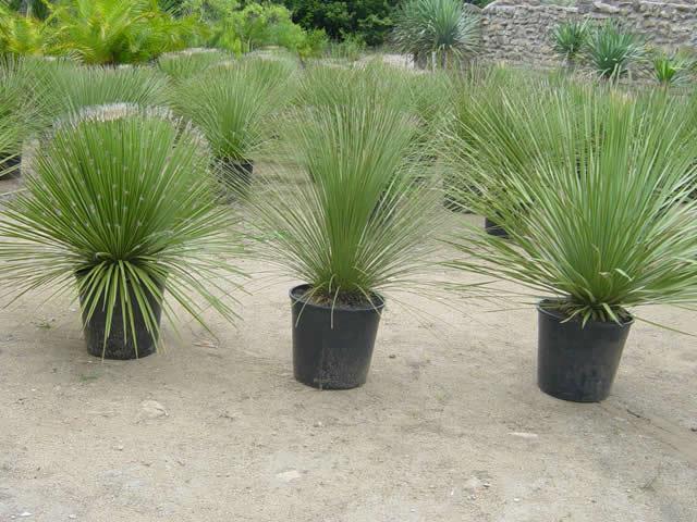 Sitio carvalho ornamentais - Plantas para pleno sol ...